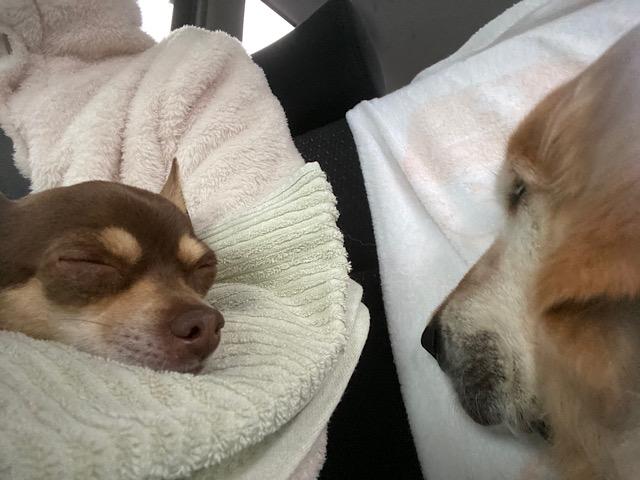 爆睡の二人