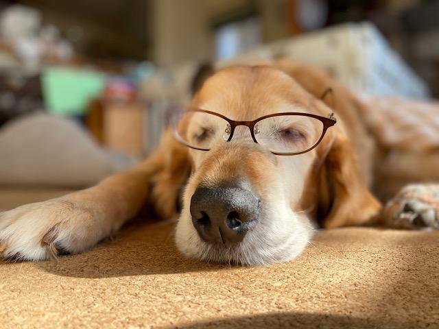 眼鏡ウォレ助