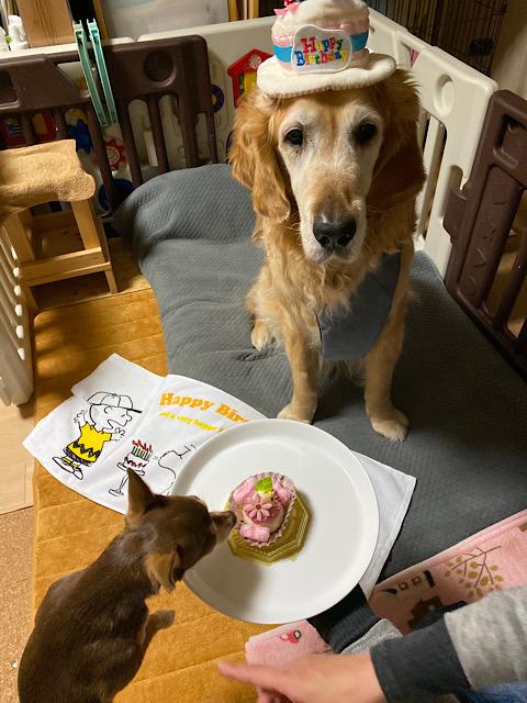 ウォレ助のケーキをまつりが狙う