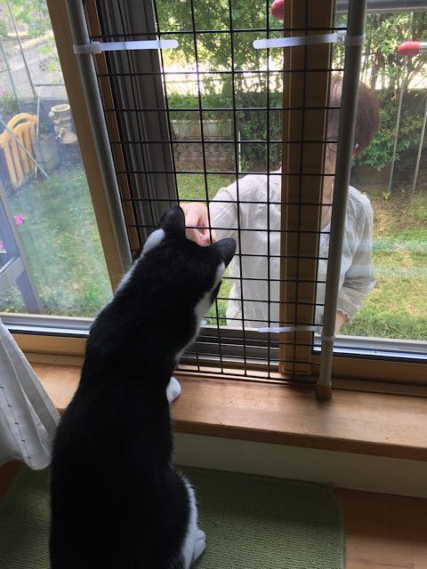 窓際で遊ぶなごむ