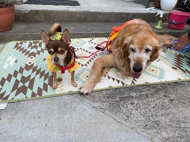 散歩後の二人