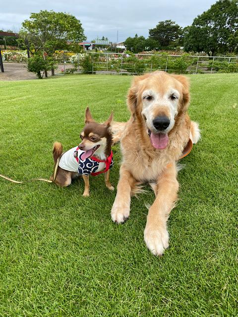 芝生に二人