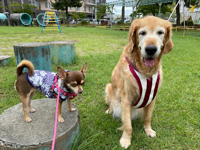診察後の散歩