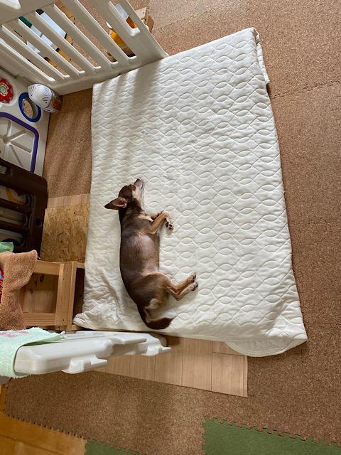 ウォレ助の寝床で横になるまつり