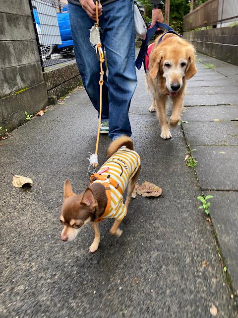 散歩の二人