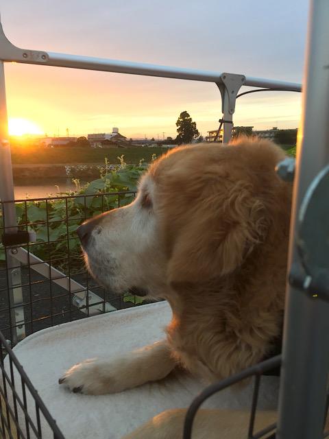 ウォレ助と夕日