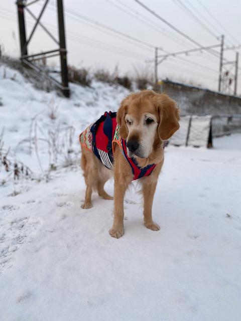 雪が物足りないウォレ