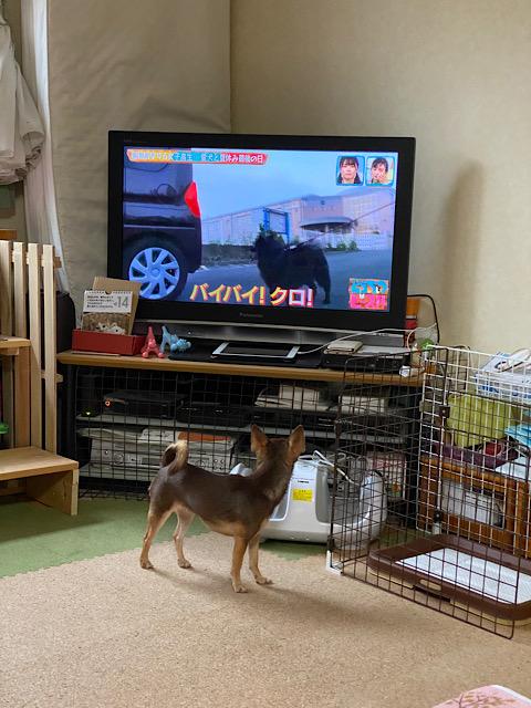 テレビを見るまつり