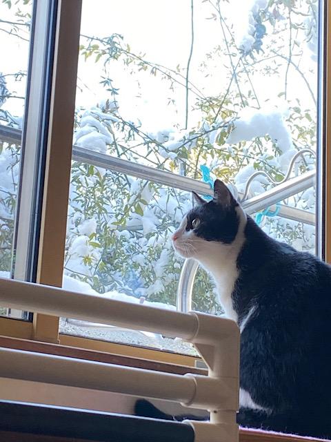 雪を見るなごむ