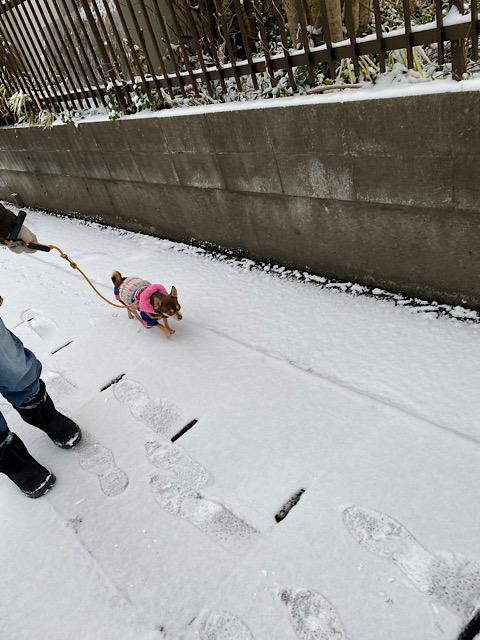 ちょうどよい雪のまつり