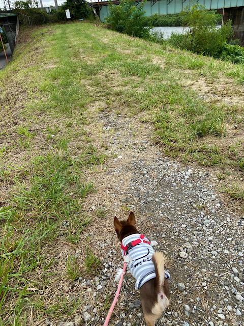 散歩のまつり