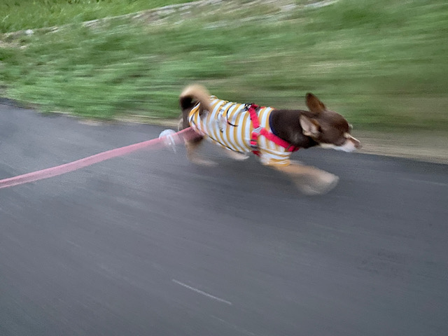 走るまつり